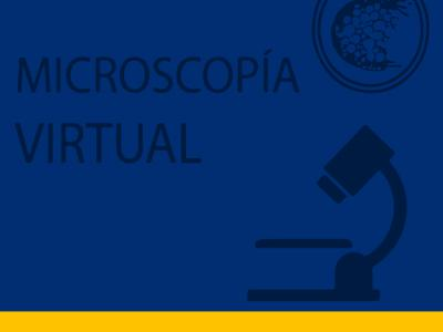 Microscopio Virtual